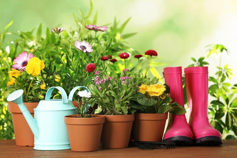 盆的开花的花和园艺设备在木桌上 免版税库存照片