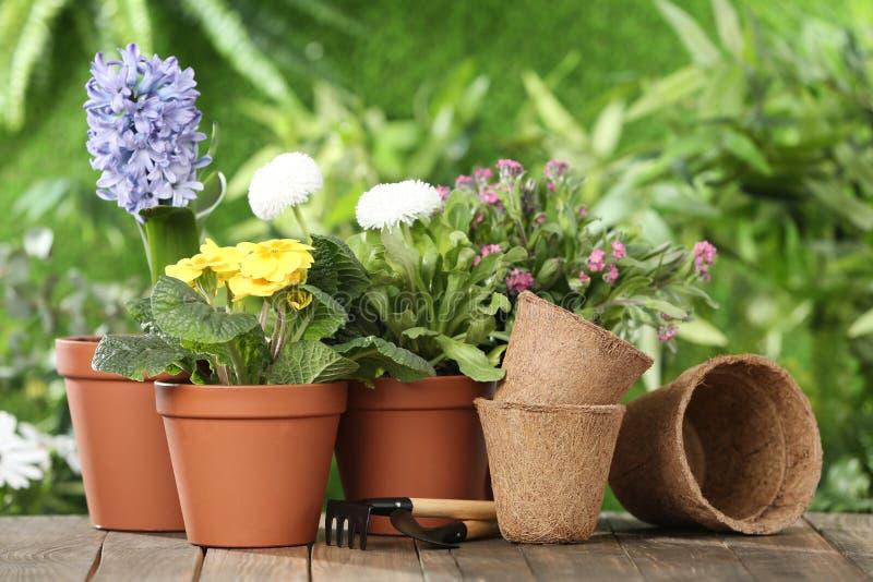 盆的开花的花和园艺设备在木桌上 库存图片