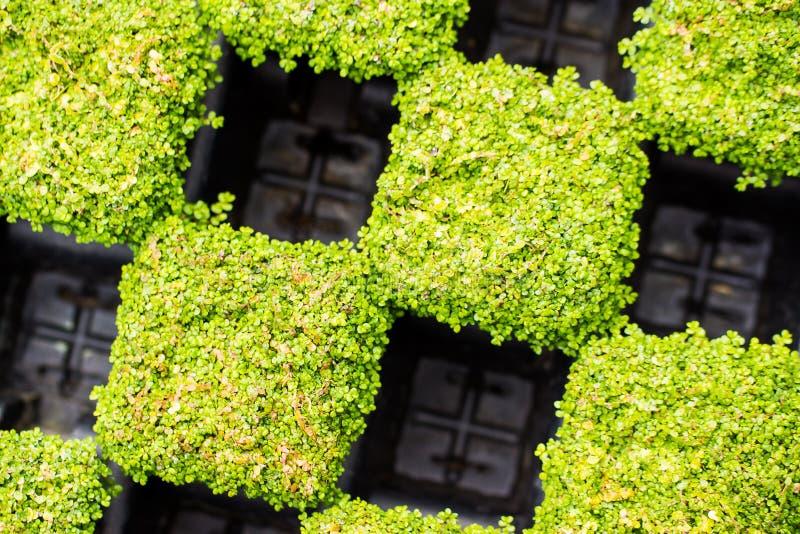 盆的植物 库存图片