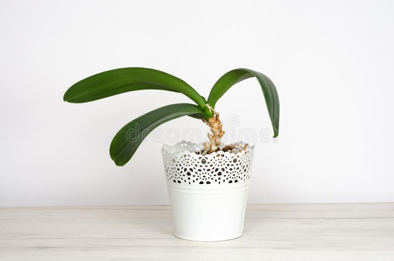 盆的植物 图库摄影