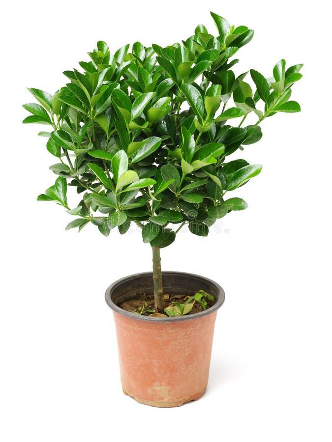 绿色盆的植物 库存照片