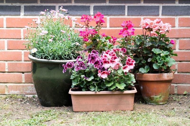 盆的花在后院 免版税库存照片