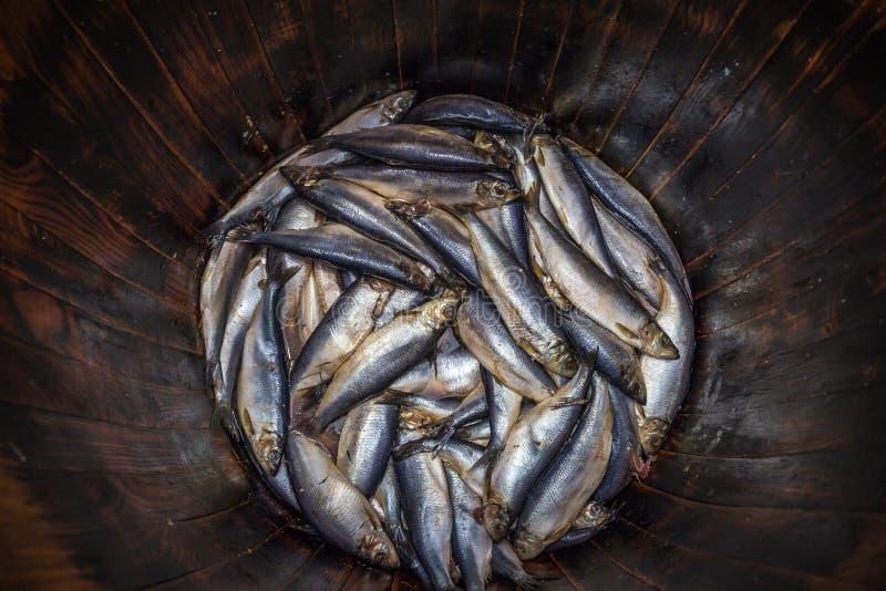 盐味的新鲜的鲱鱼在木橡木桶,传统海鲜钓鱼 免版税库存照片