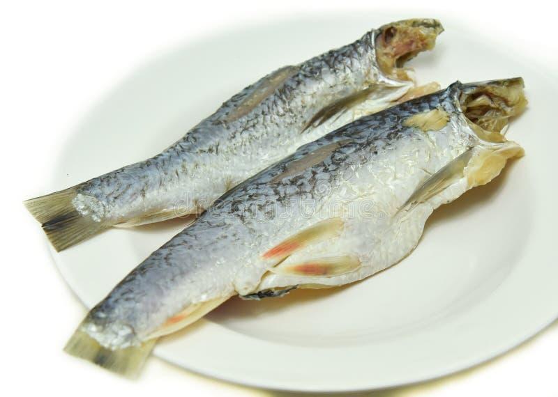 盐味的鲱鱼鱼 免版税库存图片