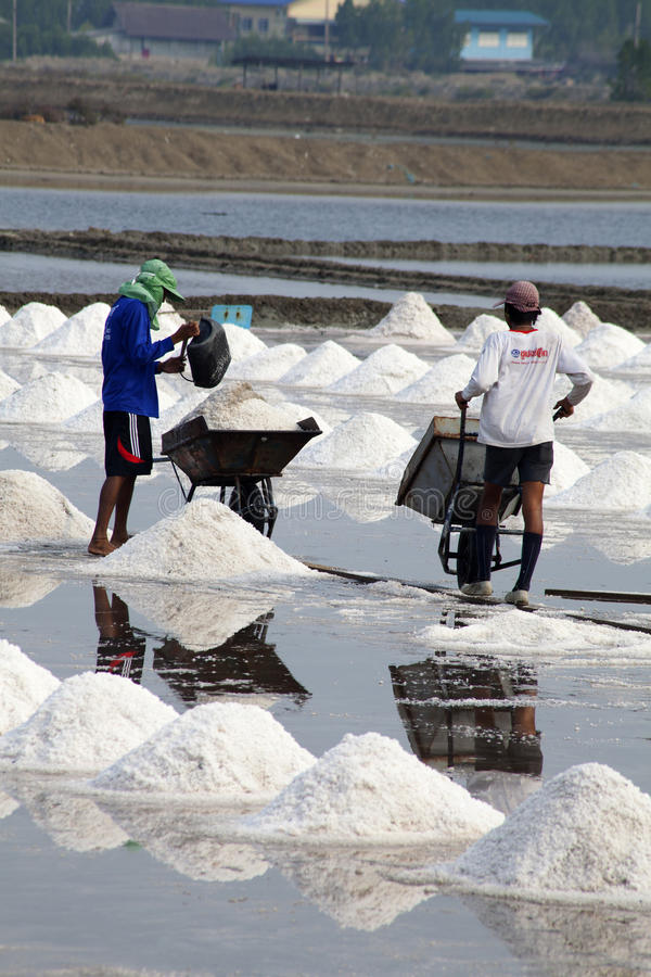 盐收获-泰国 库存照片