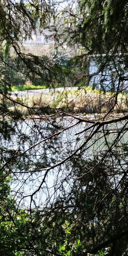 盐水湖和树 免版税库存图片