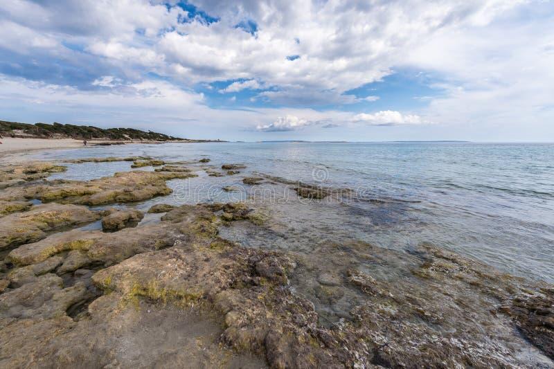 盐沼海滩在Ibiza 库存图片