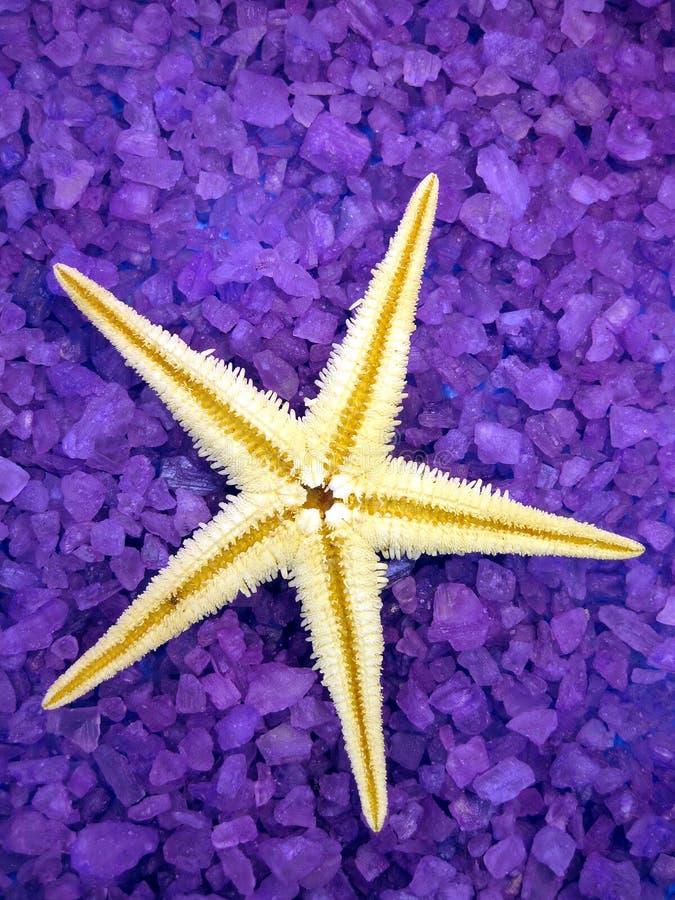 盐海运海星 免版税库存图片