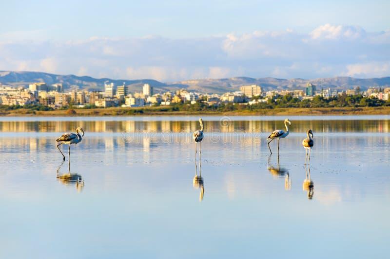 盐湖在Larnaka 库存图片