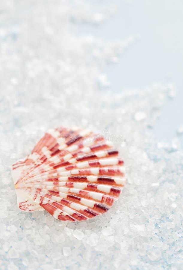 盐溶海运壳 库存照片