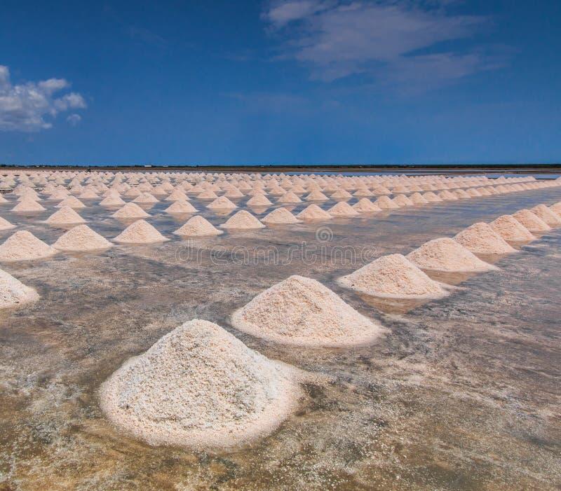 盐领域 免版税库存图片