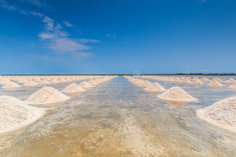 盐领域 库存照片