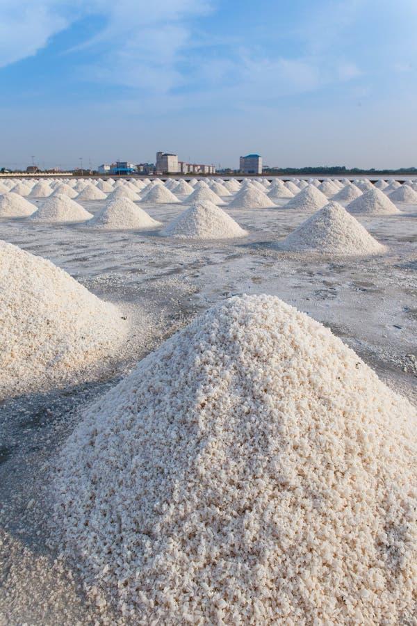 盐领域 免版税图库摄影