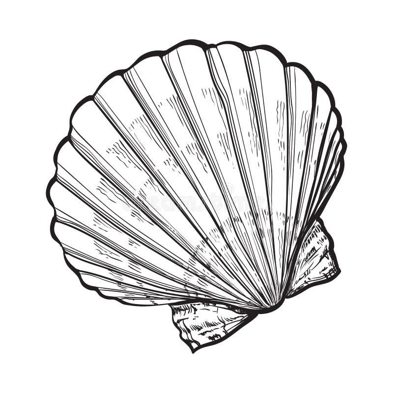 盐水扇贝海壳,被隔绝的剪影样式传染媒介例证 库存例证