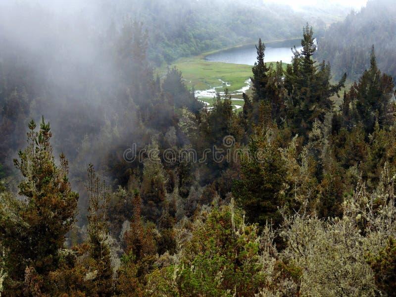 盐水湖在森林 免版税库存图片