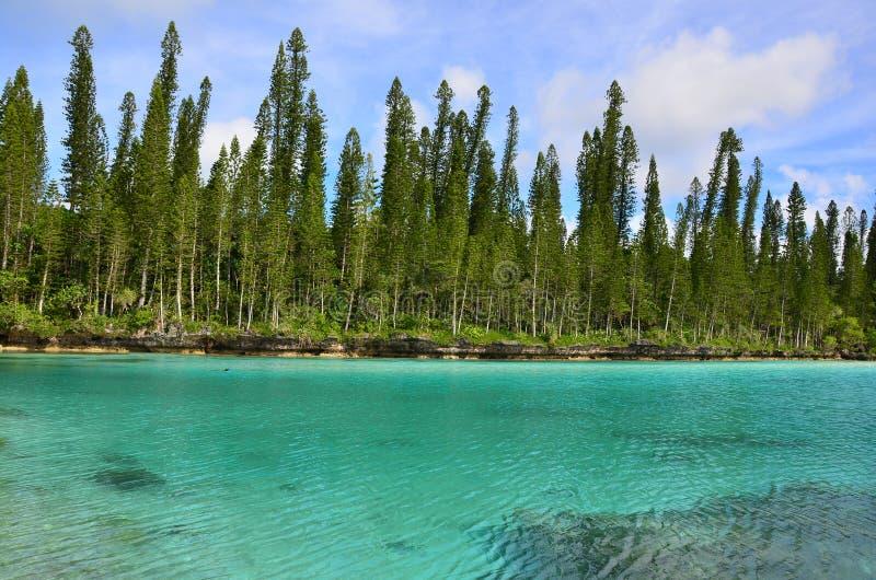 盐水湖的派恩艾兰白鹅Oro自然水池 免版税图库摄影