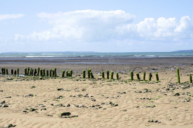 绿藻类盖了波浪破碎机 免版税库存图片