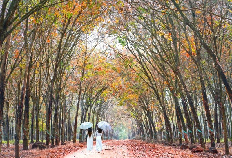 盖伞的长的礼服的两个女孩握手,路的去的末端在橡胶森林里 库存照片