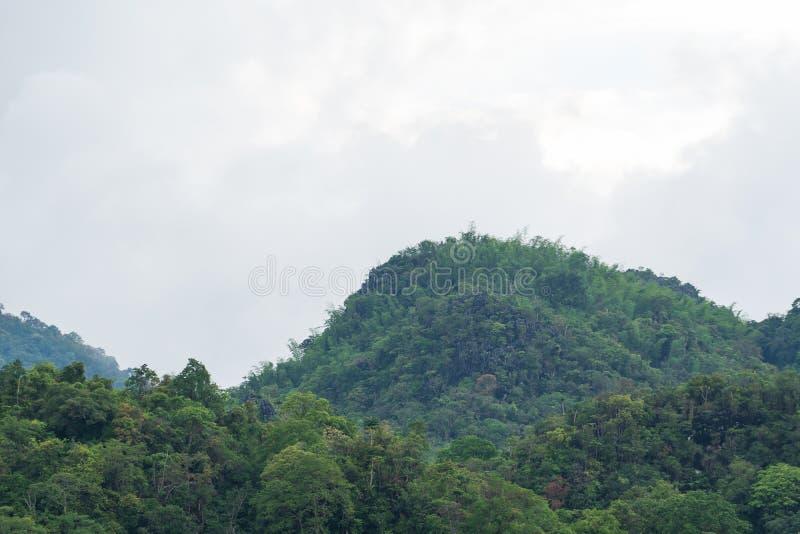 盖山的树 库存照片