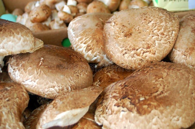 盖帽蘑菇 库存图片