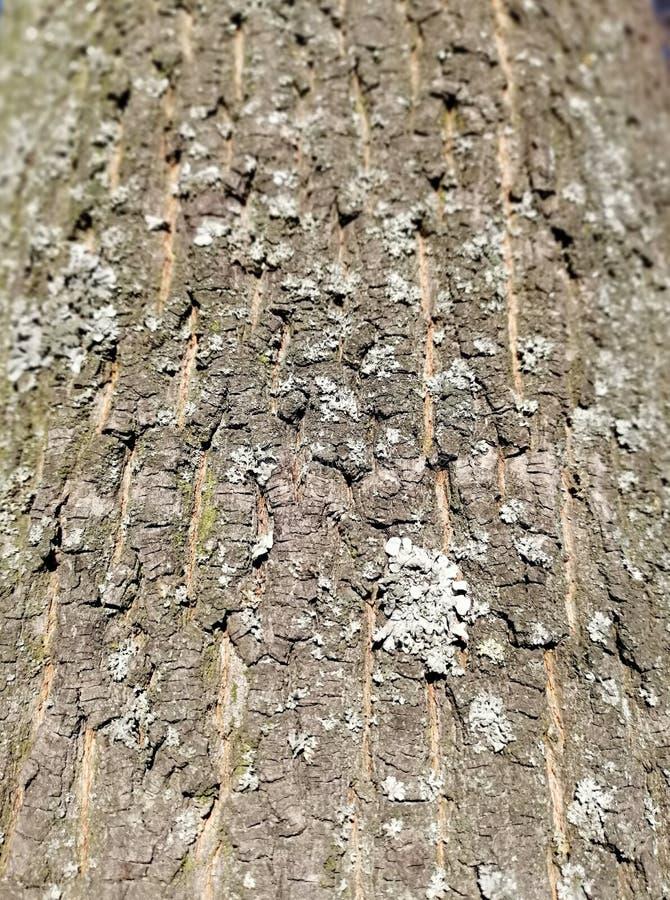 盖木头用青苔 免版税图库摄影