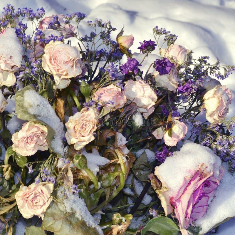 盖用雪和枯萎的花 被拒绝的爱 坏日期 库存照片