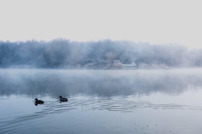盘旋在一个冷的湖的薄雾在Goldsworth公园,萨里, Wokin 免版税库存照片