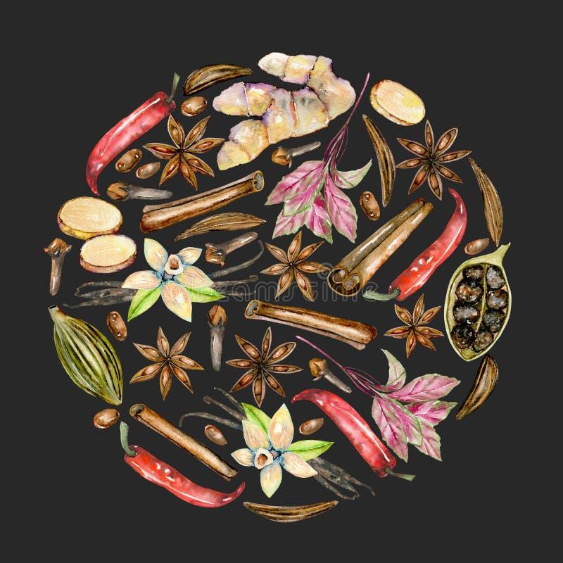 盘旋水彩香料桂香、茴香、香芹籽、豆蔻果实、蓬蒿、红辣椒、姜、香草和丁香的例证 库存例证