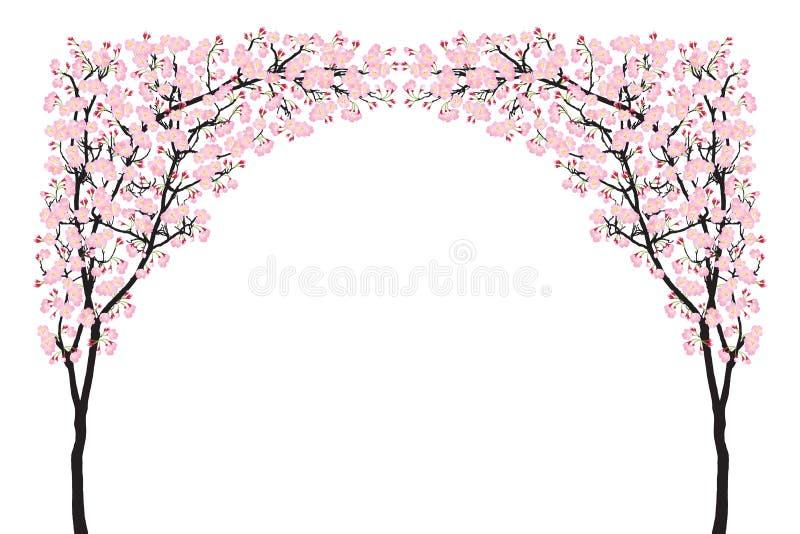 盛开桃红色佐仓树曲拱樱花曲线在白色隔绝的黑色木头 皇族释放例证