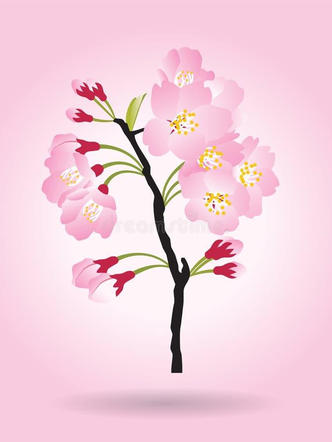 盛开桃红色佐仓树灌木樱花在桃红色背景隔绝的黑色木头 皇族释放例证
