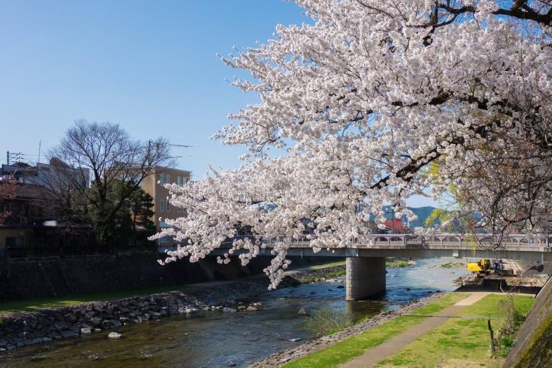 盛开樱花在高山市市,日本 图库摄影