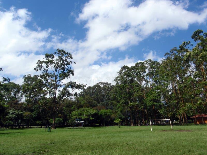 目标大公园足球结构树 库存照片