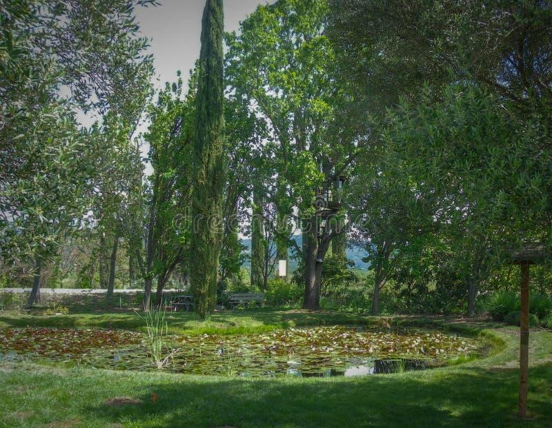相当一点公园发现了与一个小池塘 免版税库存照片