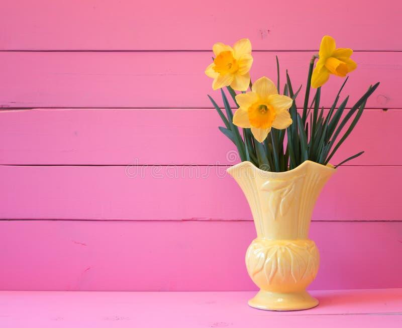 相当在绽放在春天在葡萄酒花瓶在明亮的桃红色木委员会背景与室或空间的黄色黄水仙拷贝的,文本 库存照片