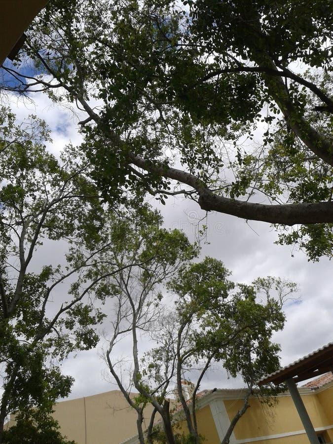 相当好树惊人的天空 免版税库存图片