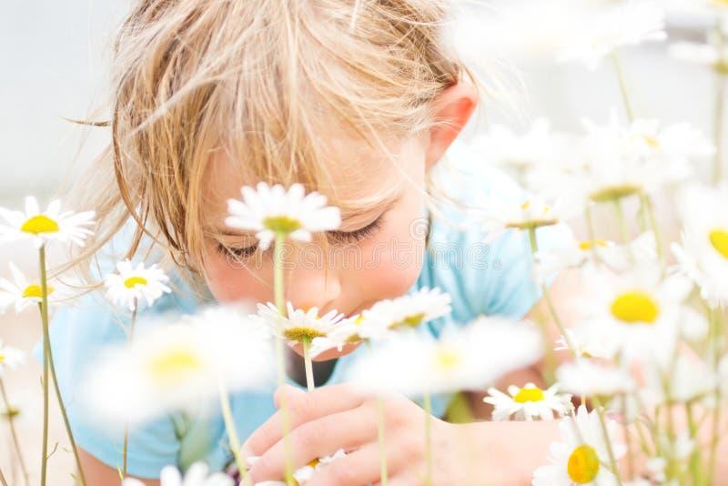 相当小白肤金发的女孩嗅到的雏菊 免版税库存照片