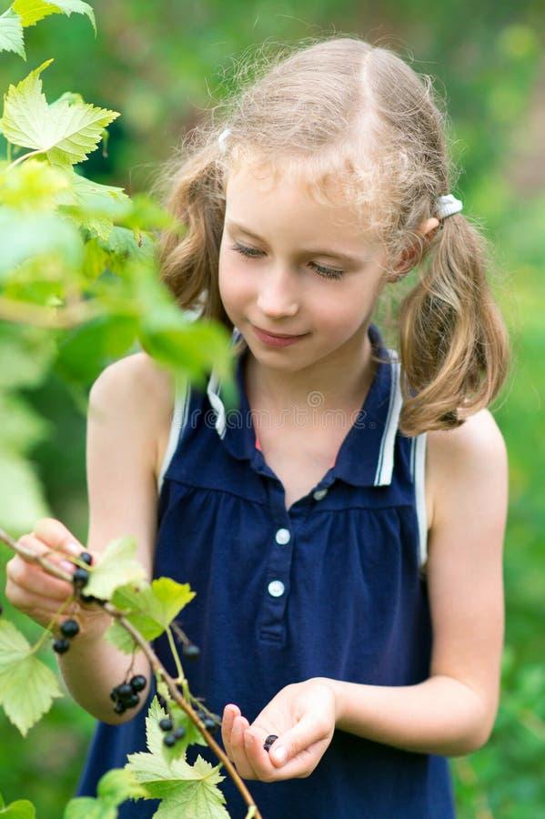 相当收集莓果的小女孩 库存图片