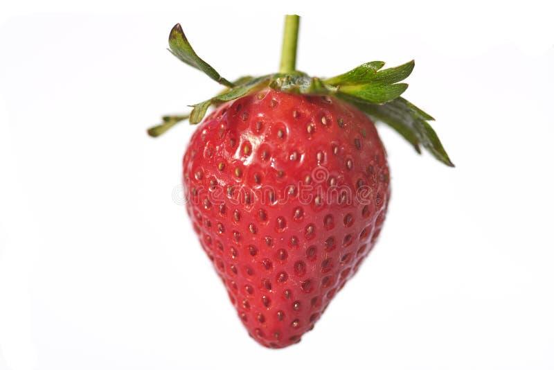 看一个孤立的草莓非常水多 免版税库存照片