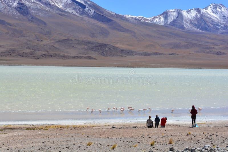 看一个美丽的盐湖的游人在玻利维亚 免版税图库摄影