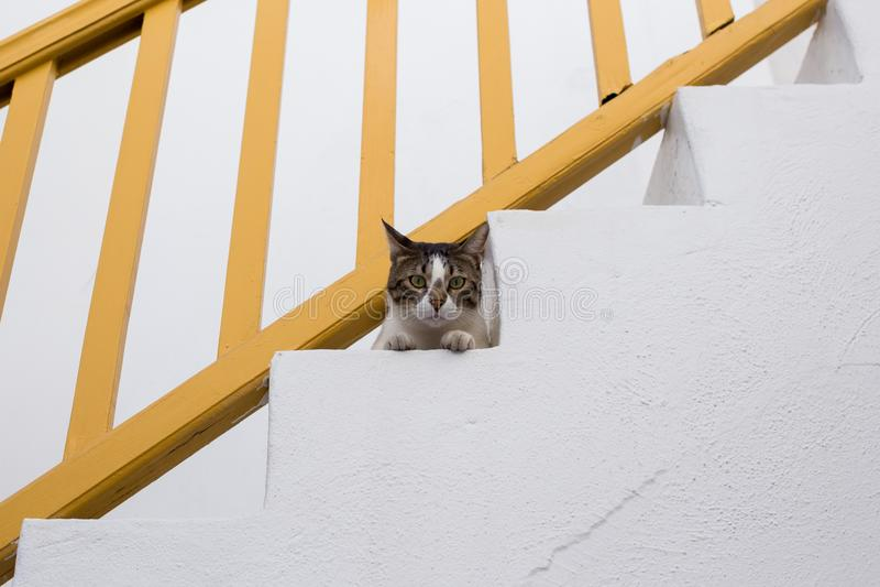 看从台阶的猫照相机 图库摄影