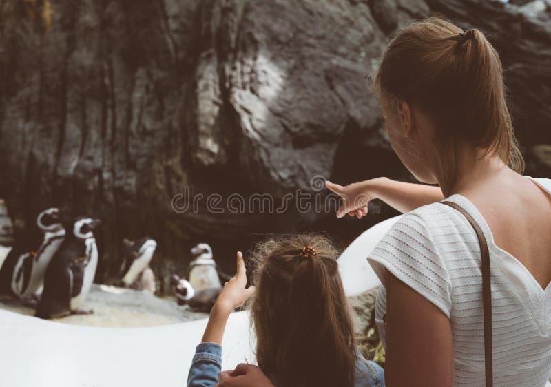 看企鹅的妇女和她的女儿在动物园里 免版税库存照片