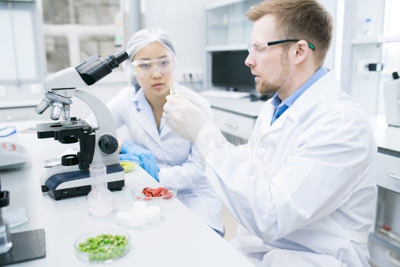 看同事的妇女科学家学习肉 库存照片