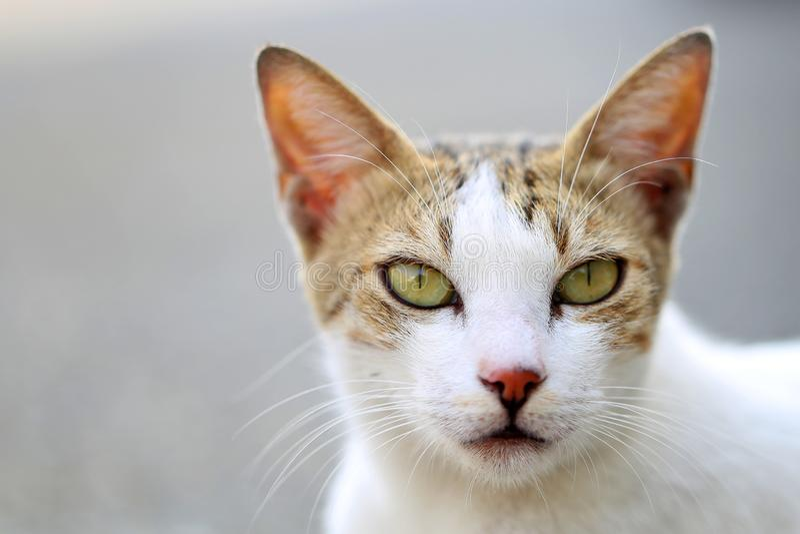 看和放松对游人的小猫和向一个小村庄镇,Al nakil的街道的新的访客问好,沙特 免版税库存图片