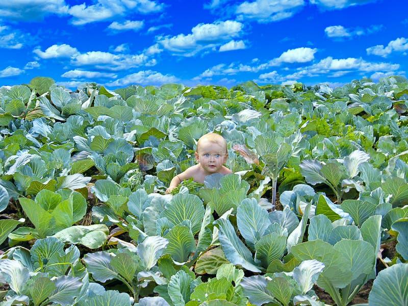 看在圆白菜外面的婴孩 圆白菜种植园的新生儿 库存照片