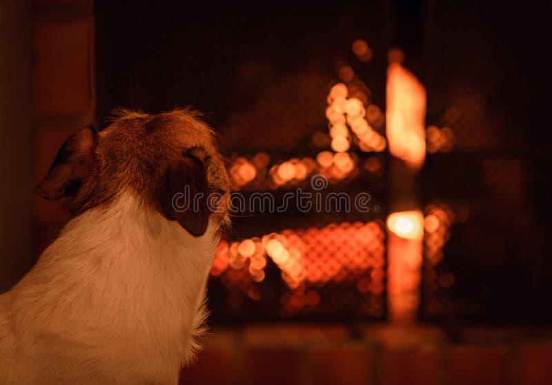 看在壁炉的狗火 免版税库存照片