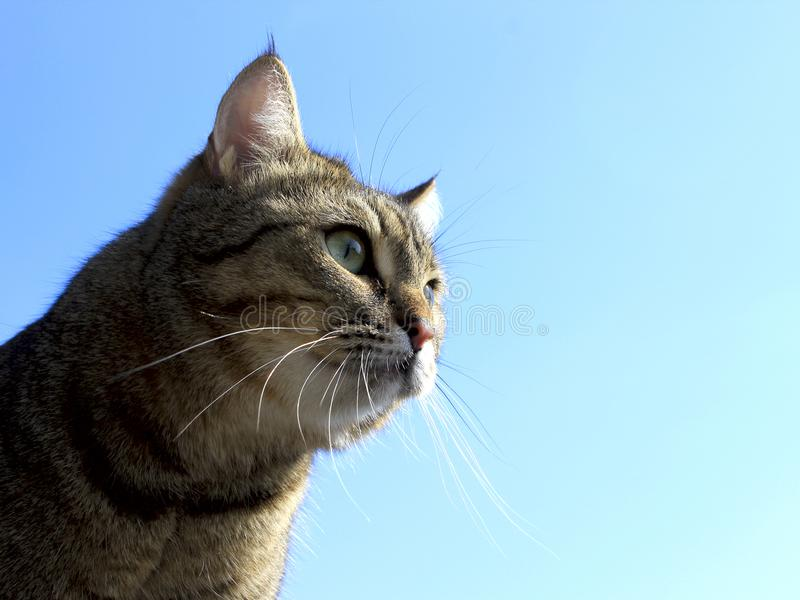 看在天空的猫 免版税图库摄影
