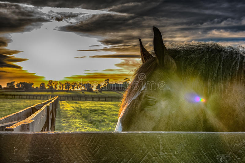 看在有象Instagram编辑的一个栏杆后的马头 免版税图库摄影