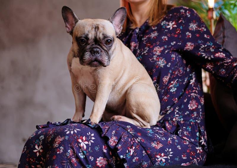 看在照相机的一个逗人喜爱的哈巴狗的特写镜头照片和坐膝部 免版税库存照片