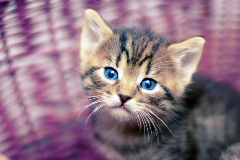 看在篮子外面的可爱的小猫 库存照片