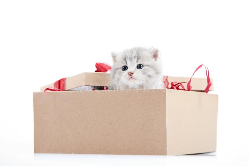 看在装饰的纸板箱外面的小的可爱的蓬松小猫是存在为特殊场合 免版税库存图片
